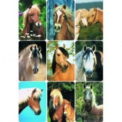 Etikety Decor fotky konských hláv